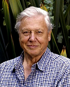 david-attenborough-2-sized